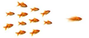 Chefer vill bli bättre på ledarskap men företagen misslyckas!