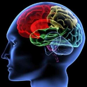 Använda hjärnan bättre i arbetet - Internova
